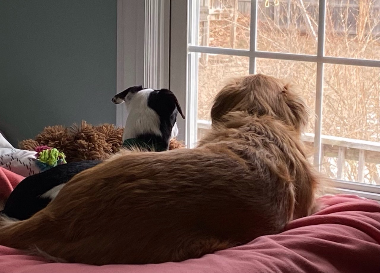 Oakley taught Jersey how to be an inside dog.